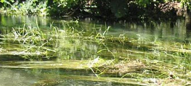 River Monitoring and Surveys