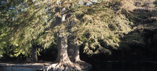San Marcos Watershed Initiative
