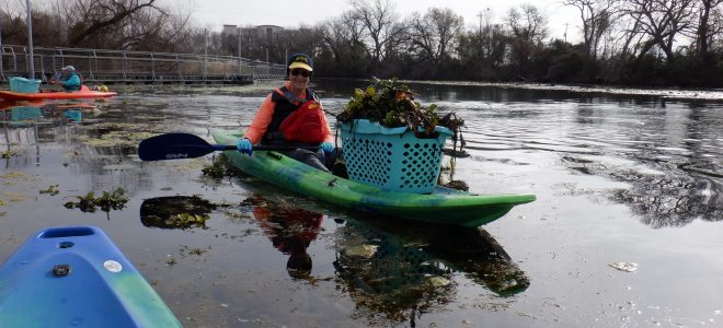 Water Hyacinth Removal